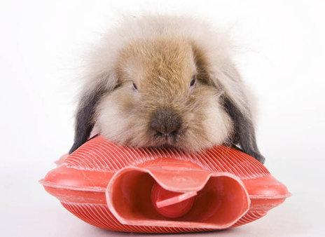 rsz_fluffy-bunny-rabbit-hot-water-bottle