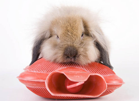 rsz_fluffy-bunny-rabbit-hot-water-bottle